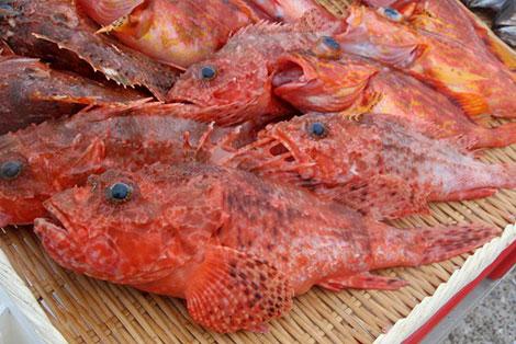 魚に逢いたくて オニカサゴ画像