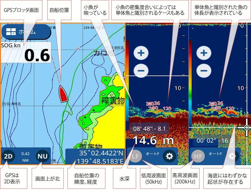 オオモンハタ魚探映像